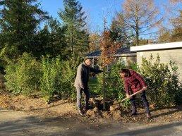 Vakantieparken in Putten planten tweehonderd bomen