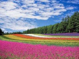 Subsidie voor bloemrijke akkerranden in Putten