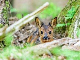 Natuur in beeld: 'Een nieuwe generatie'