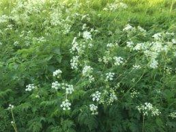 Weersomstandigheden leiden tot uitzonderlijke groei plantsoenen